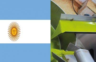 argentina olive oil