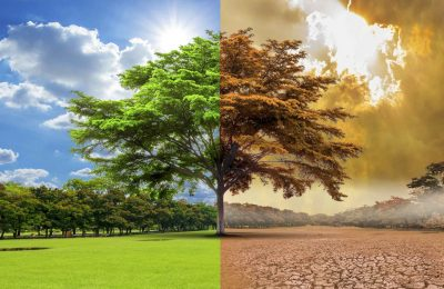 أبحاث علمية: الإحتباس الحراري يهدد إنتاج زيت الزيتون!!