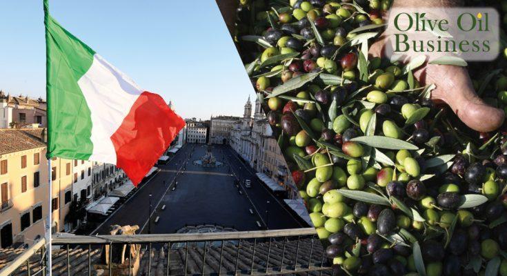 2 مليار أورو خسائر قطاع زيت الزيتون الإيطالي: جمعية المزارعين تقترح مشروع إنقاذ وطني