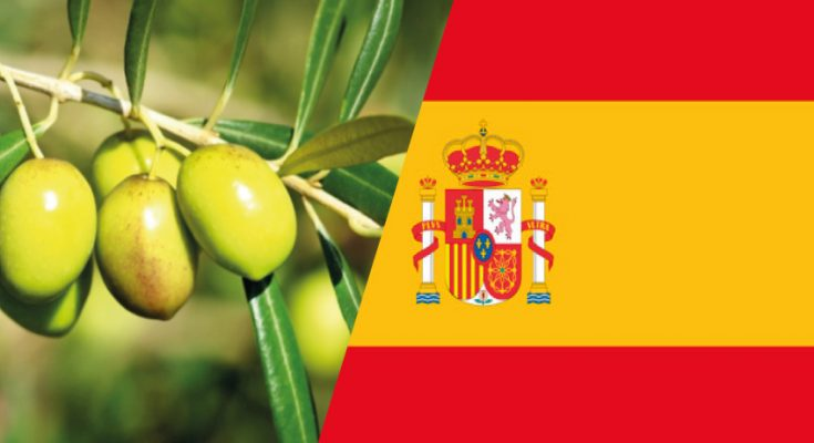 اسبانيا: تعمق أزمة قطاع زيت الزيتون والمزارعون يطلقون صيحة فزع