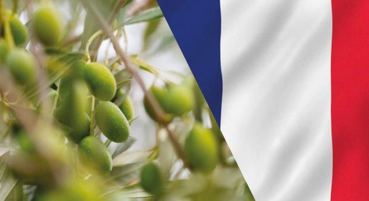 شرق فرنسا: توقعات بخسائر بنسبة 80% في الموسم القادم لجني الزيتون