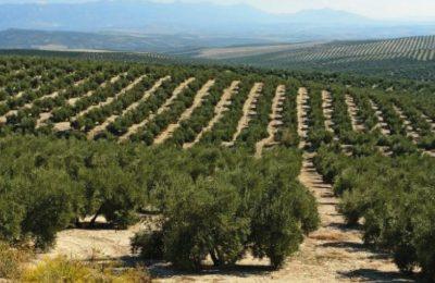120 ألف أورو لدعم وتطوير سياحة زيت الزيتون بمقاطعة Jaén الإسبانية